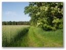 Weg mit Getreidefeld