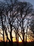 Bäume vor Sonne